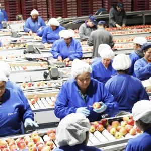 Proceso de Manzanas